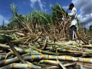 The government's big gift to sugarcane farmers on Diwali, increase so many rupees…